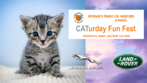 CATurday Fun Fest Scheduled for May 1