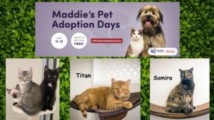 Free Adoptions at Homeward Bound Cat Adoptions during Maddie's Pet Adoption Days June 11 - 12!
