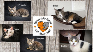 CATpacity Alert: Homeward Bound Cat Adoptions Seeking Homes for Cats & Kitties